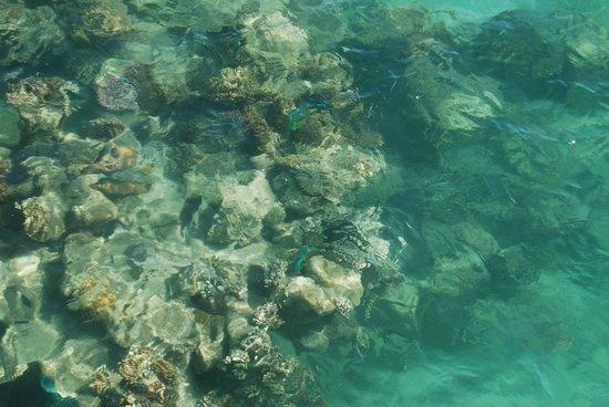 Big Cat Green Island Reef Cruises - Day Tour: reef