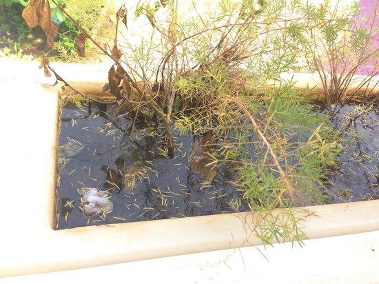 Hotel Blue Cove: Cultivo de mosquitos en pleno hotel