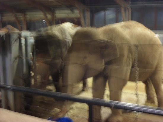 Lookout Lodge : Bedtime with the Elephants