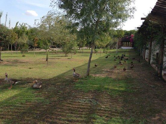 Ardea Purpurea Lodge: Ducks and geese