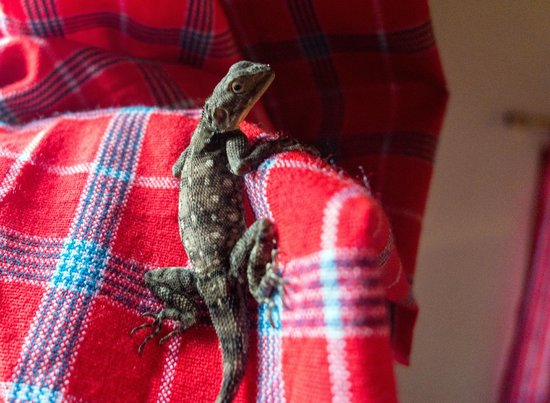 Honey Badger Lodge: In-room wildlife - found this harmless little fella on our curtains