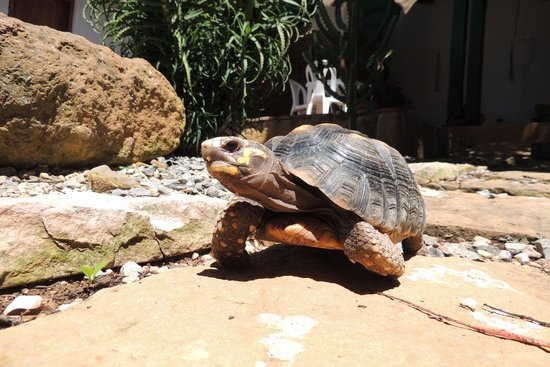 Posada Sueños de Antonio: Schildkröte wohnt im Garten