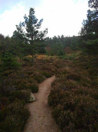 Bennachie Hill Walks: Path in the forest