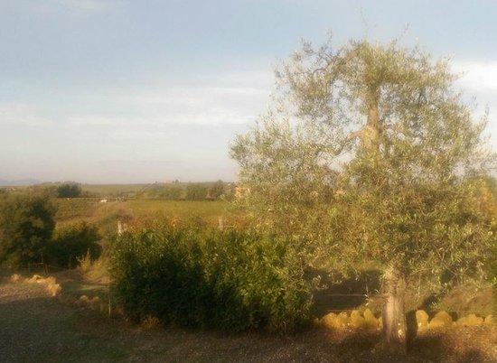 Agriturismo Il Poggione: wineyards