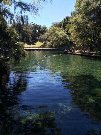 Wekiva Island: Wekiva River