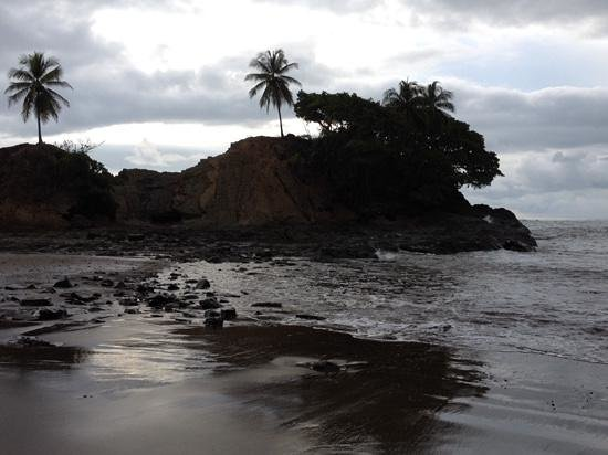 Coconut Grove Oceanfront Cottages: the Lion