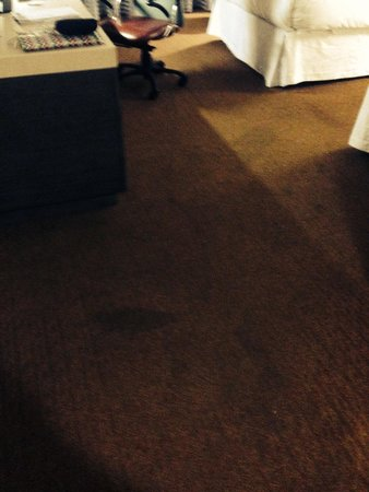 Doubletree by Hilton Bloomington - Minneapolis South : Filthy carpet