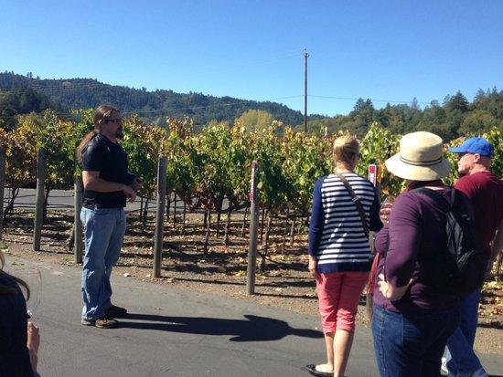 Bennett Lane Winery: On the Tour...