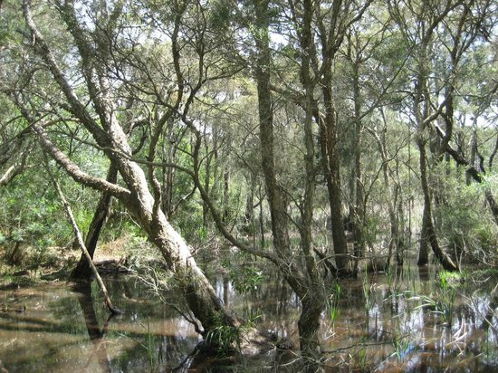 Lane Cove National Park: Swamp at Fairyland