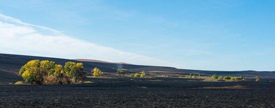 Tallgrass Prairie National Preserve : The prairie after the planned burn