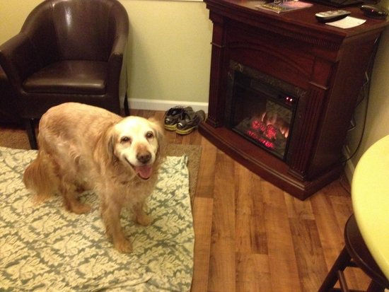 Alaska Garden Gate B & B: Our sweet dog Tucker loves the Garden Gate B&B! Particularly the warm fireplace!