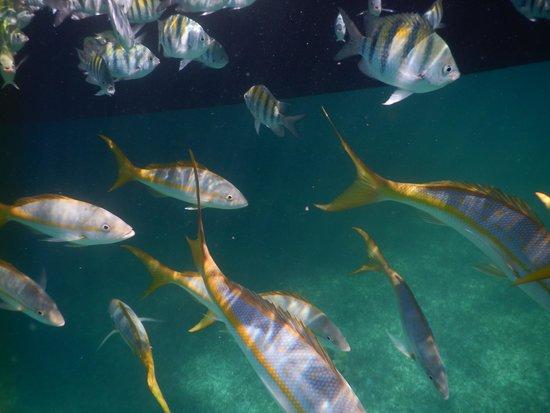 Seahorse Sail and Snorkel Adventure: nassau snorkel trip