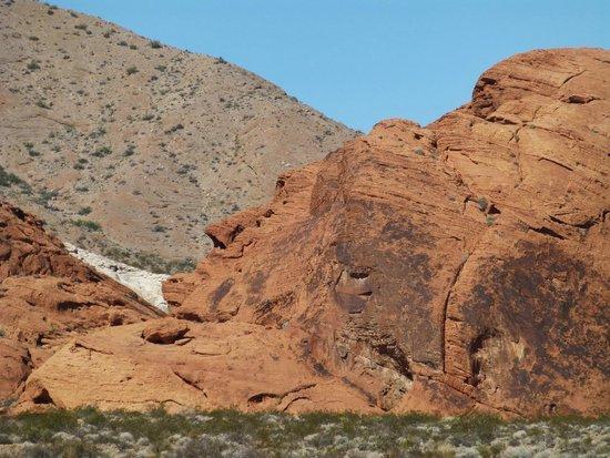 Desert Fox Hummer Tours Las Vegas