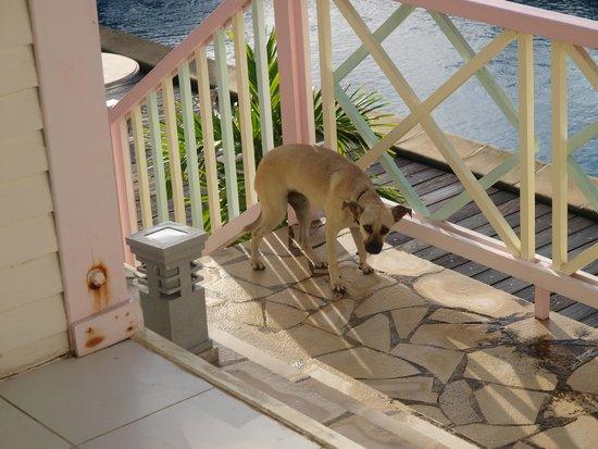 Sol Hotel: При отеле живут две собаки, которые любят ходить в гости по утрам