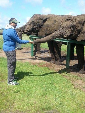 Книсна, Южная Африка: Feeding time!