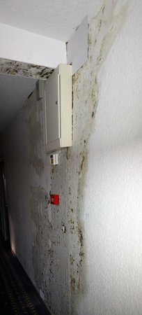Hotel Armen Le Triton: Mold in corridors and guest rooms