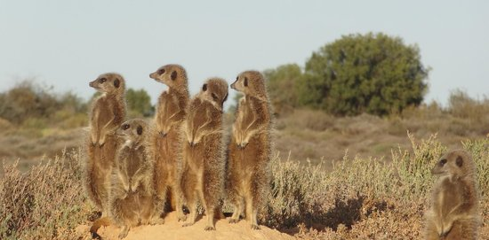 La Pension Guest House: suricates !