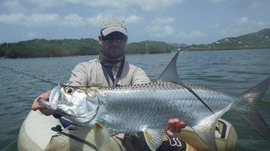 Antigua Fly Fishing & Light Tackle Charters: Nick and tarpon
