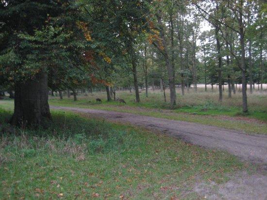 Jægerborg Dyrehave: passeggiata con i cervi
