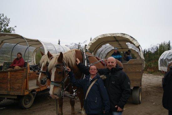 Healy, AK: Met de paarden