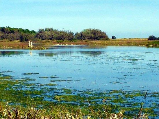 Pineta di Classe: le lagune salmastre  adiacenti al fiume Bevano