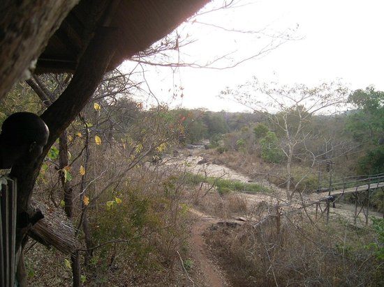 Bua River Lodge : Family of elephants in the river bed
