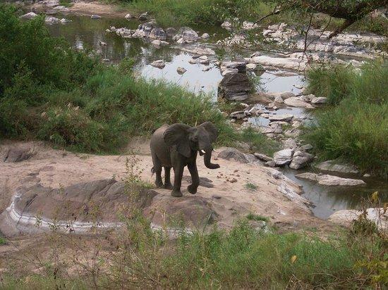 Bua River Lodge: Elephant