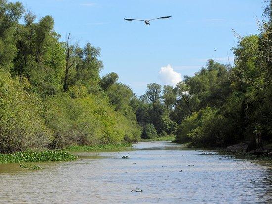 Atchafalaya Basin Landing & Marina- Swamp Tours: Beautiful Atchafalaya Basin