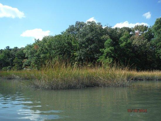 Marsh Area Picture Of Owl Creek Virginia Beach Tripadvisor