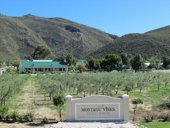 Montagu Vines Guesthouse : Montagu Vines