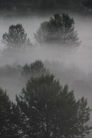 Greenwood Country Inn: Misty trees, taken from the balcony