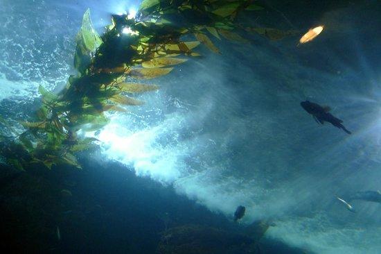 Dancing Starfish Picture Of Aquarium Of The Bay San Francisco Tripadvisor