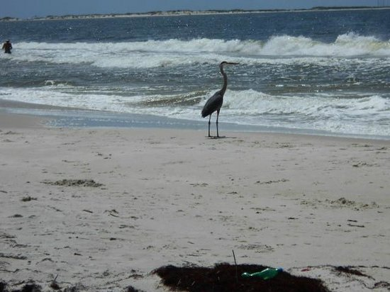 Dauphin Island Public Beach: Shared our beach with the locals!