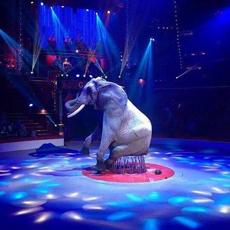 Cirque d'hiver Bouglione : Spectacle : Géant