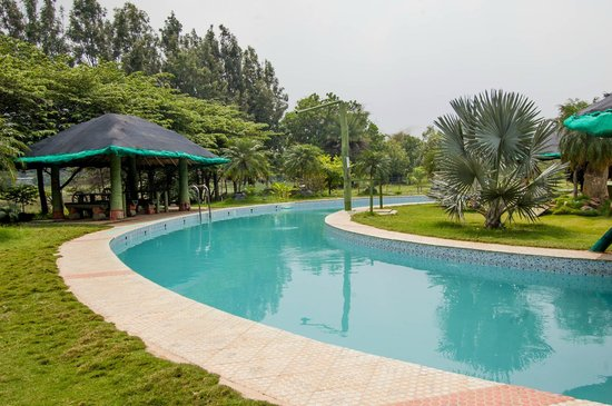 Small pool picture of mango mist resorts bengaluru for Small resort
