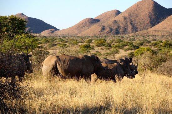 Tswalu Kalahari Reserve: paysages sublimes