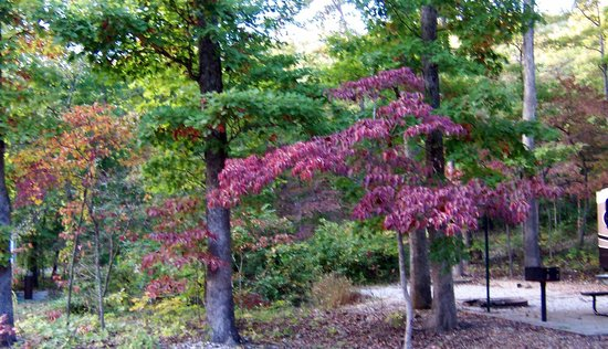 Withrow Springs State Park: Fall Leaves