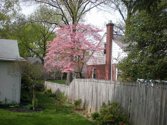 Dutch Pride Guest House Bed and Breakfast: Dutch Pride's  Dogwood's