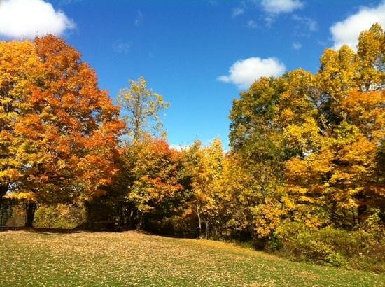 Tarrywile Park & Mansion: Autumn in the park