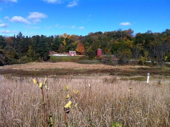 Tarrywile Park & Mansion : The old dairy farm in Autumn