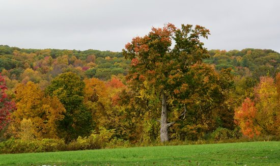 The Inn At Mount Pleasant Farm : Fall colors seen from the house