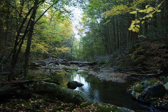 The Inn At Mount Pleasant Farm: The brook at twilight