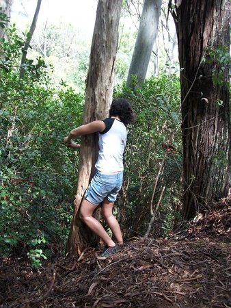 Aiea Loop Trail: Hugging the tree to get to the guava on the other side.