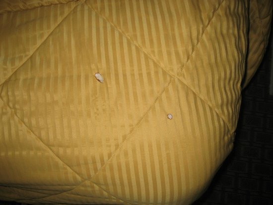 Days Inn Hurricane/zion National Park Area : cigarette burns on bedspread