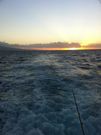 Oahu picture of whipsaw sportfishing honolulu tripadvisor for Honolulu fishing charters