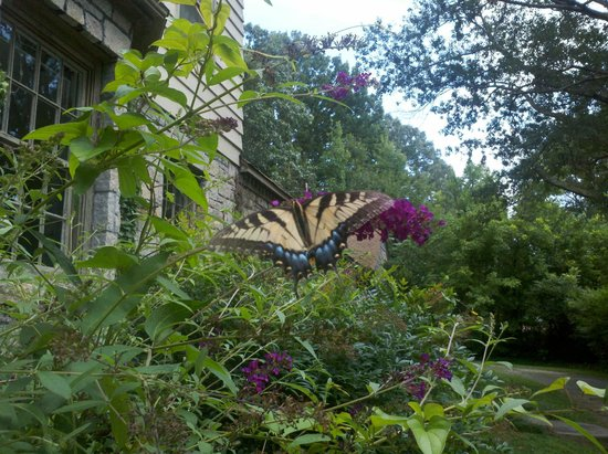 White Rose Manor Bed Breakfast Beautiful Flowers Butterflies And Birds Seasonal