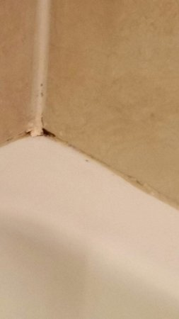 Doubletree by Hilton Hotel New Orleans Airport: Mold in tub.