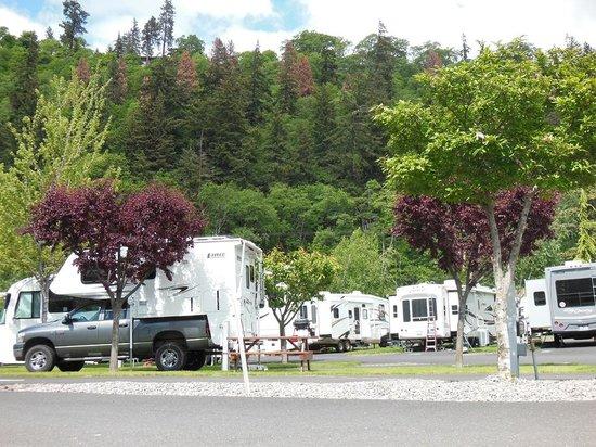 Bridge RV Park & Campground: Park Photo 002
