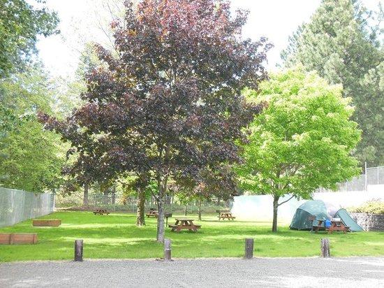 Bridge RV Park & Campground: Tent Camping
