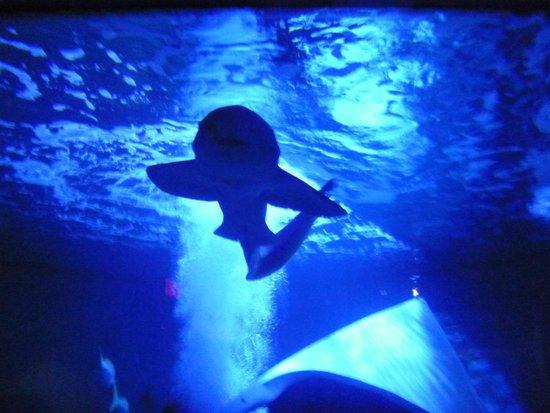 Jellyfish Picture Of Mystic Aquarium Mystic Tripadvisor